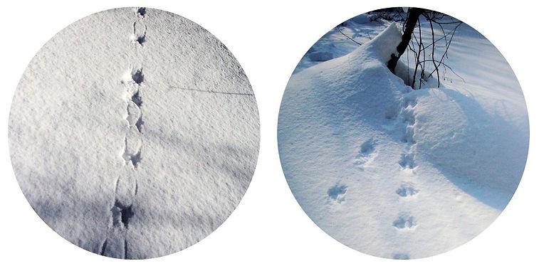 モモンガの足跡痕2景.jpg