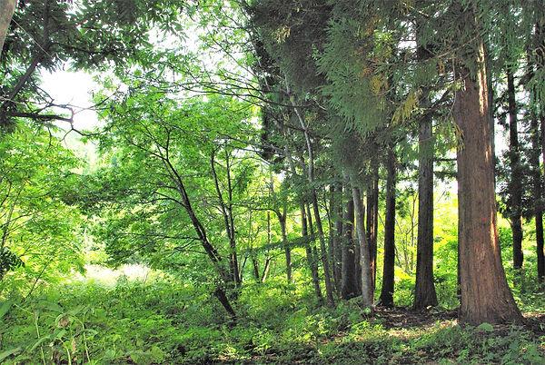 2010-9-15大沢林道 038a.jpg