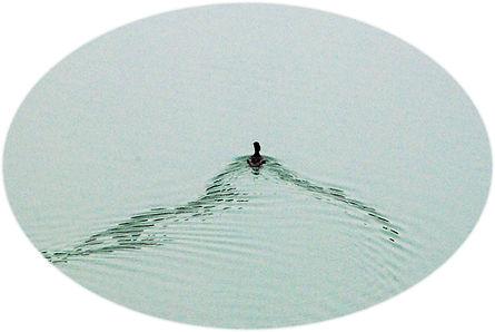 2010年4月17日ノスリ美山湖 001b.jpg