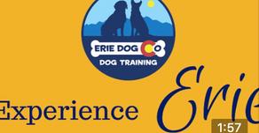 Experience Erie Dog Co Dog Training!