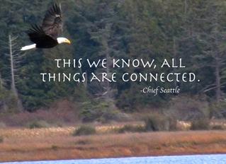 Animal Medicine...the mighty Eagle