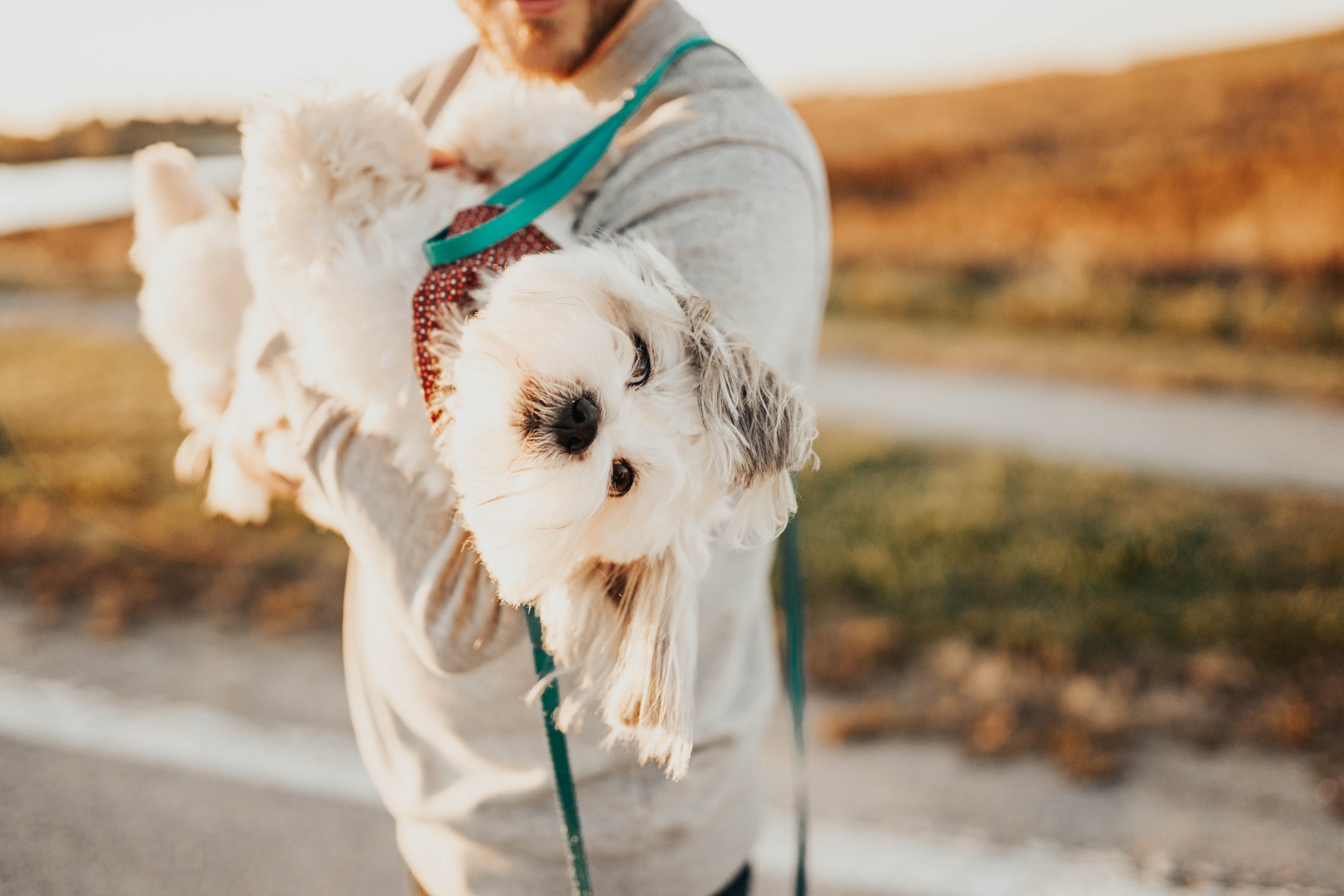omaha engagement session with your dog