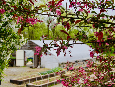 In Bloom Flower Farm- Georgetown, KY