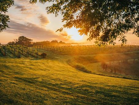 Chenault Vineyards- Richmond, KY