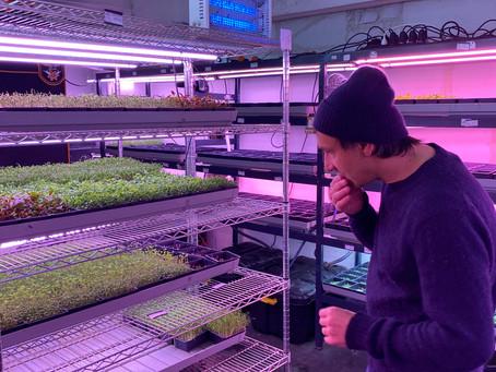 Wesh grow : des sous-sols aux toits, la folle ascension des micro-pousses