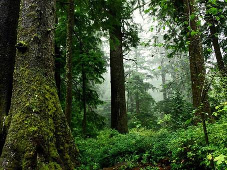 Safe Burning Saves Forests and Lives