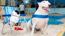 Parque de Diversões para PETs faz sucesso no Shopping Villa Lobos!