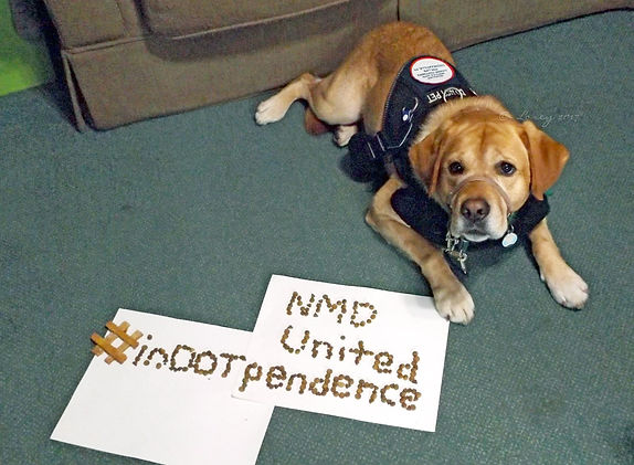 "A golden service dog lays on the floor with a navy blue harness on. On the floor next to the dog are two white pieces of paper with dog treats and dog food spelling out ""# inDOTpendence NMD United"". Her photo caption read ""Uh, Alexa, order more dog treats""."