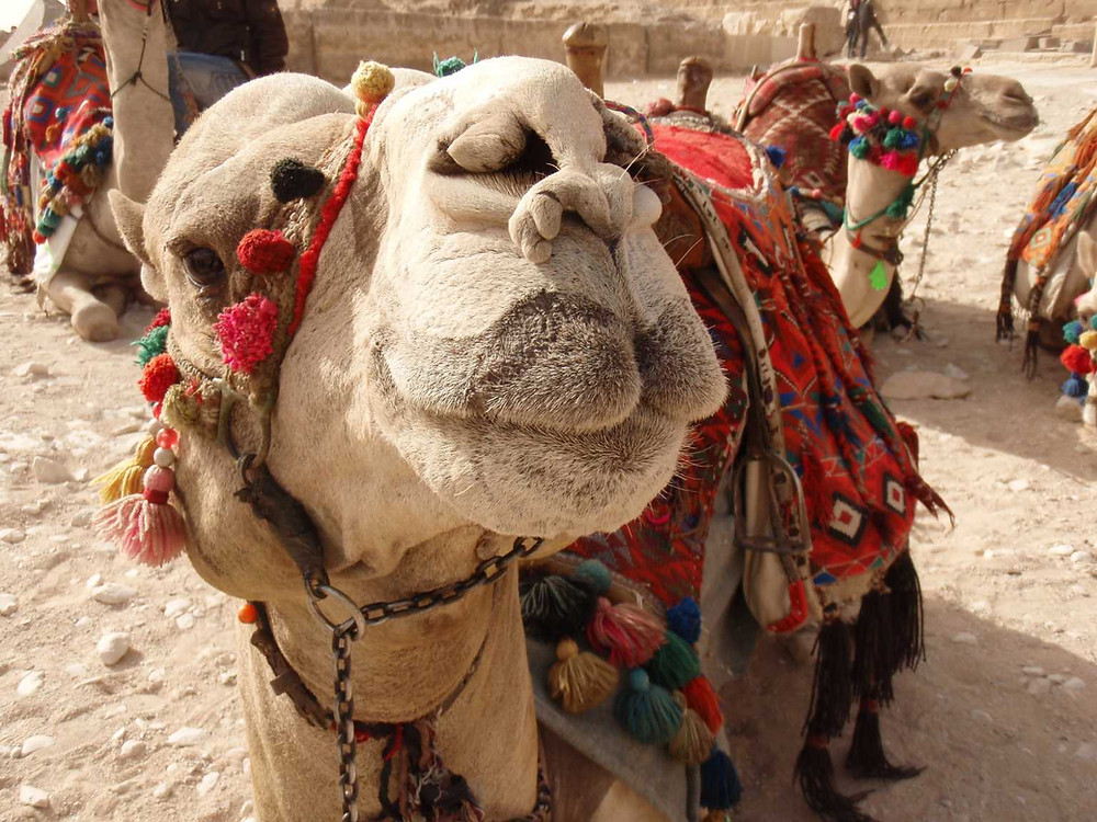 2010年 エジプト(ナミベリーダンススタジオ)