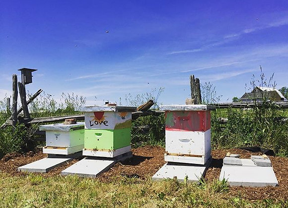 rent a hive yearly subscription