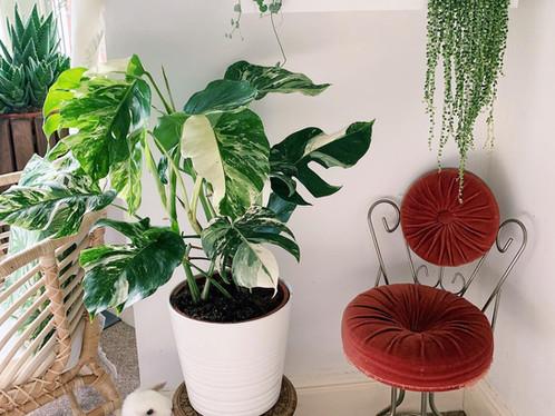 5 Beginner Houseplants