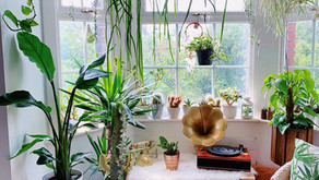 5 Ways To Bunny-Proof Your Houseplants