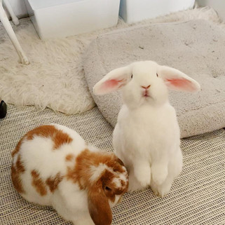 10 Ways To Bond With Your Rabbit
