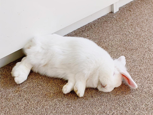 5 Steps To Free Roam Your Rabbit