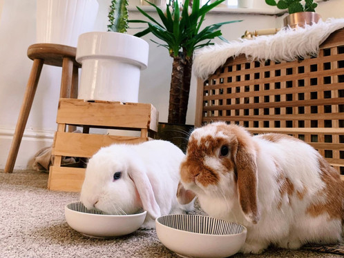 What Should You Feed Your Rabbit