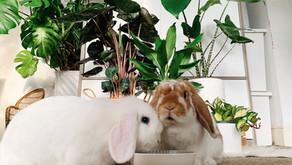 Bunny Safe House Plants