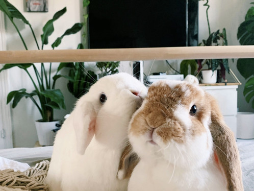 Is a Rabbit the Pet for You?