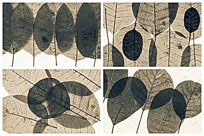 photographies feuilles encadrement La villa hortus