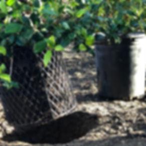 planting0.jpg