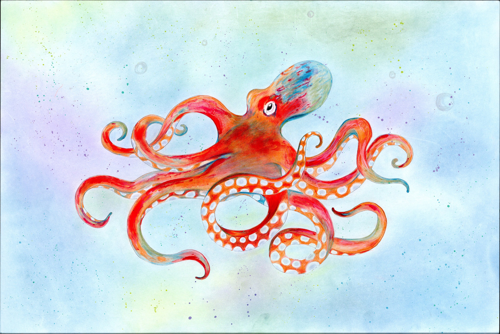 Octopus - DHS
