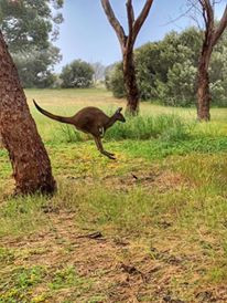 The Land Of Kangaroos.jpg