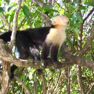 Monkeys 2.JPG