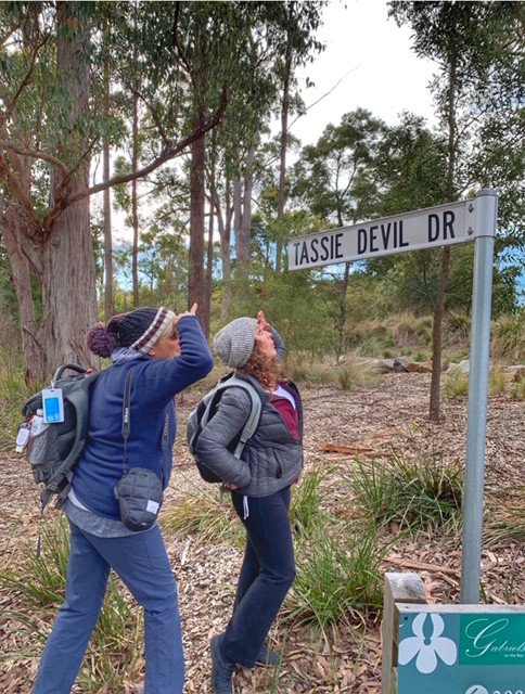 Tasmania-Searching For The Tassie Devils