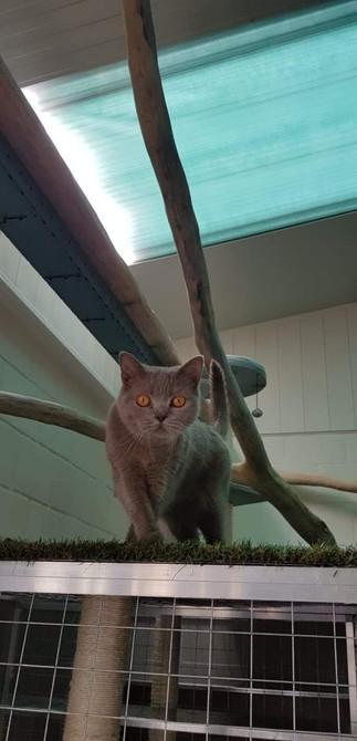 Kattenpension Le Bon Chat | Wetteren