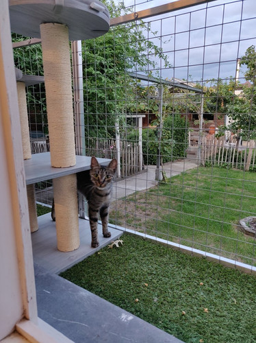 Kattenpension Le Bon Chat | Wetteren