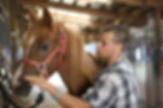 boy horse.jpg