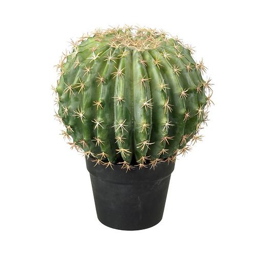 Melon Potted Cactus
