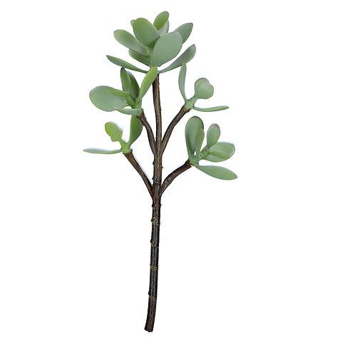 Jade Plant Succulent Pick
