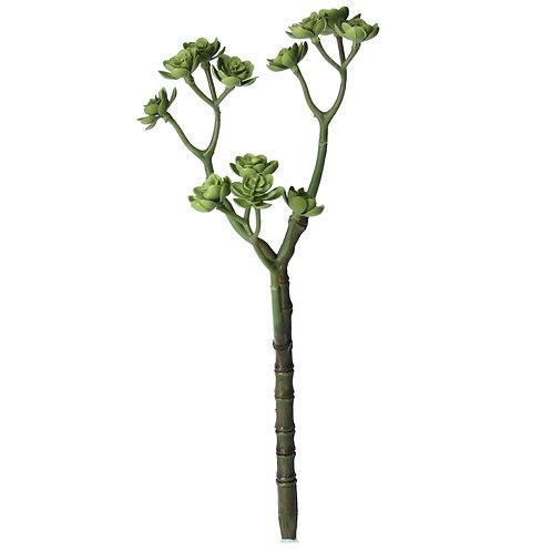 Echeveria Succulent 3 Arm Pick