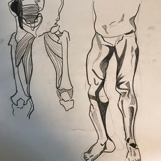 Leg Muscle Studies