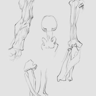 Muscle Study
