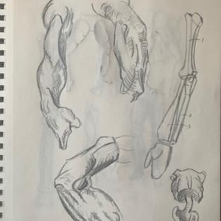 Bridgman Drawings Torso+Arm