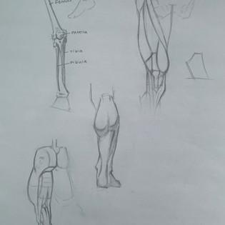 laurenchudner_legmuscles1jpg
