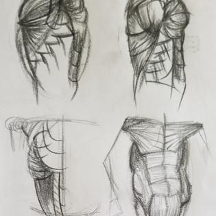 Torso Muscle Studies