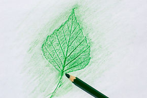 Pencil rubbing a leaf of birch on a whit