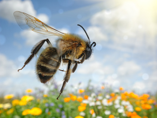 Why there is no plan bee? Easy-to-grow plants that attract bees, why create a moss lawn...