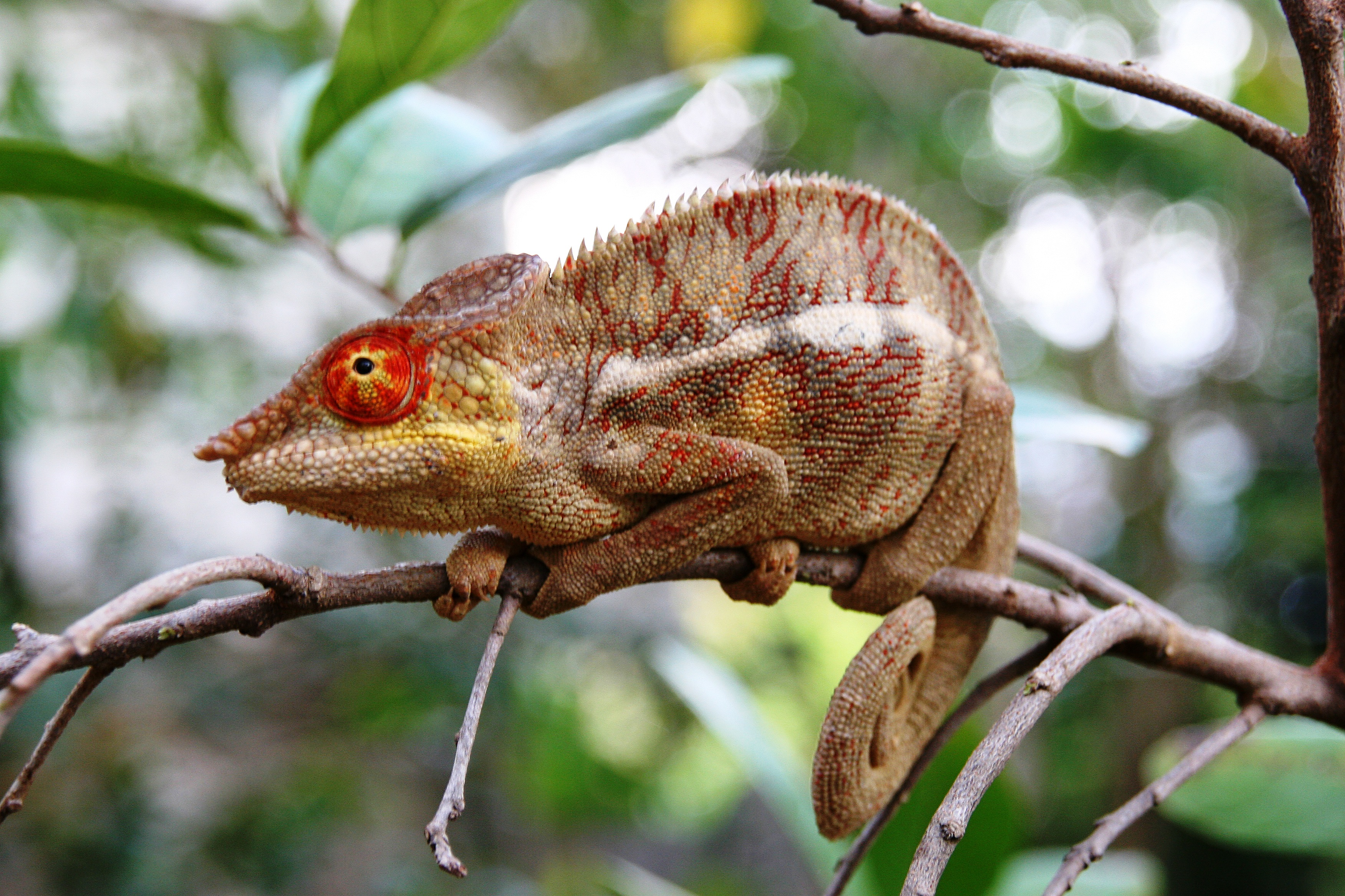 MadagascarJE05_440