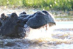Okavango - selfdriveadventures.com