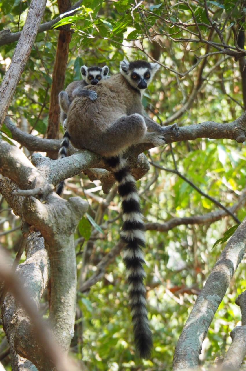 4x4 adventure Madagascar