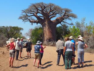 Madagascan Adventure Blog: Part 4