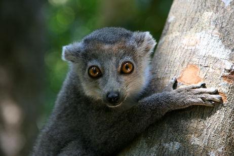 MadagascarJE05_399.JPG