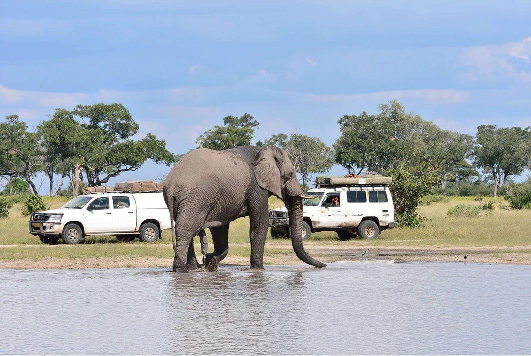 Bull Elephant at Savuti Waterhole
