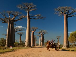 Madagascar our latest African Adventure