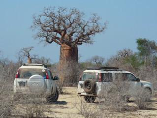 Madagascan Adventure Blog: Part 5