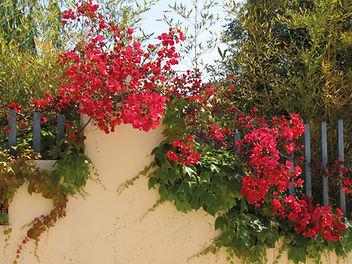 Elba-Sardinien-Korsika 2014 008.JPG