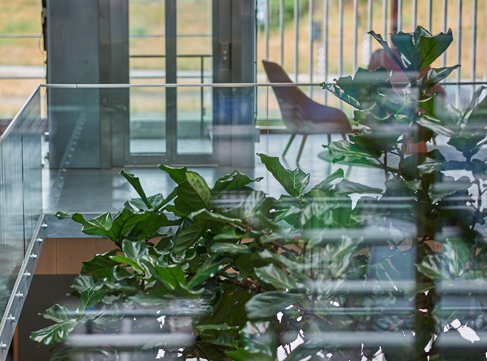 Plants at Airios Netherlands